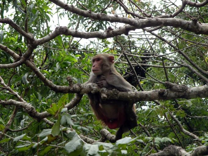 南湾猴岛,陵水旅游攻略 - 蚂蜂窝