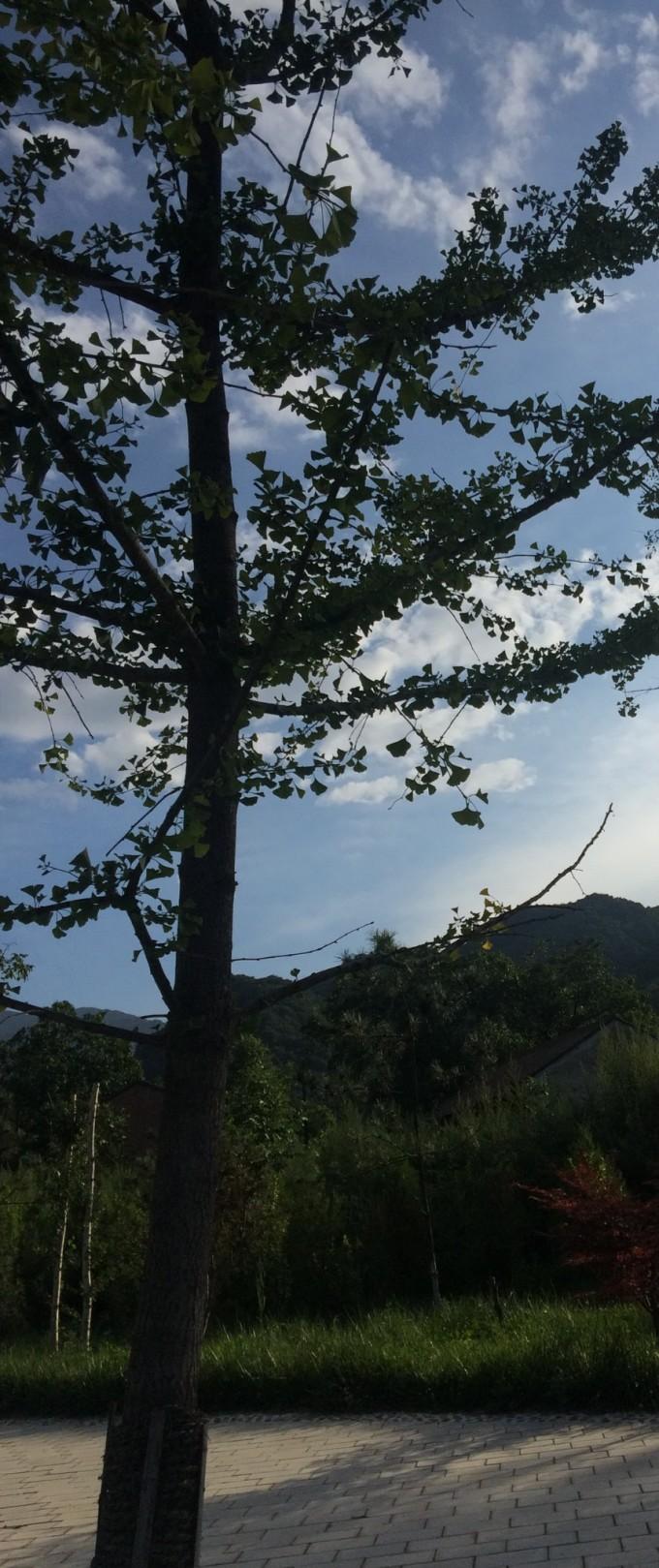 狮子站在树飞图片风景