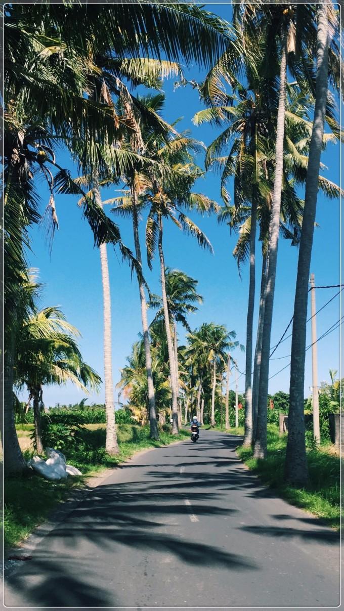 这里,最高的不是屋顶,而是椰子树,分贝最大的不是汽笛声,而是狗吠.