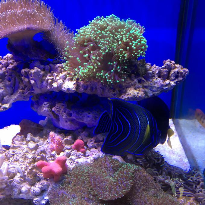 壁纸 海底 海底世界 海洋馆 水族馆 680_680