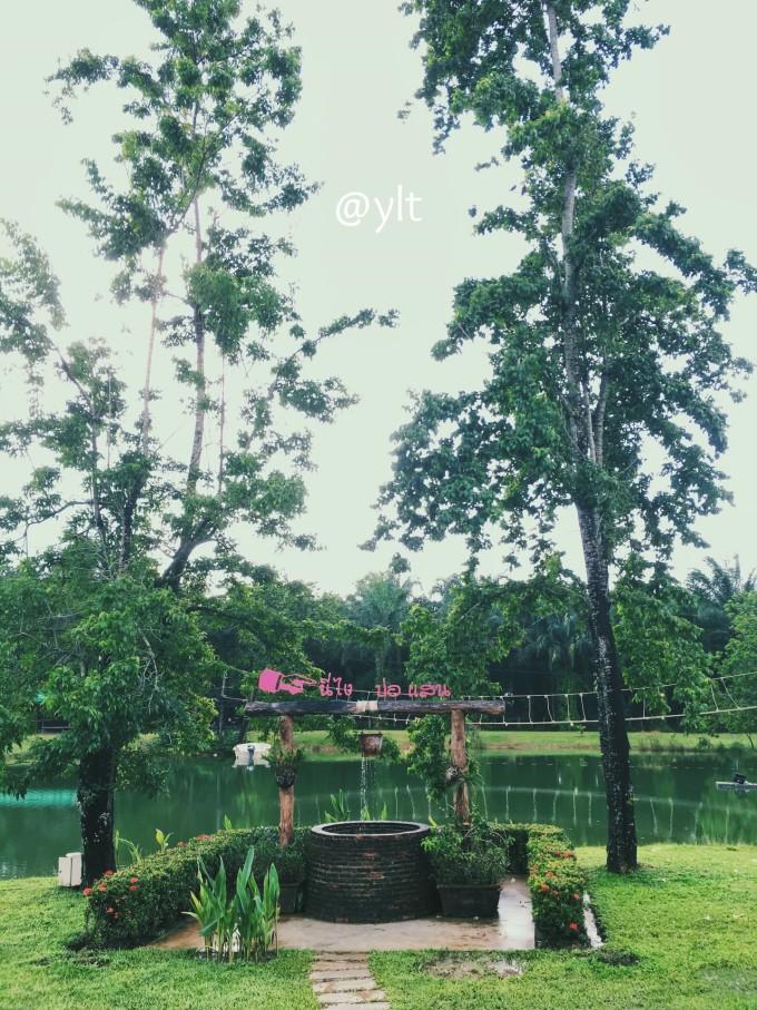 泰国像松树塔菩提子