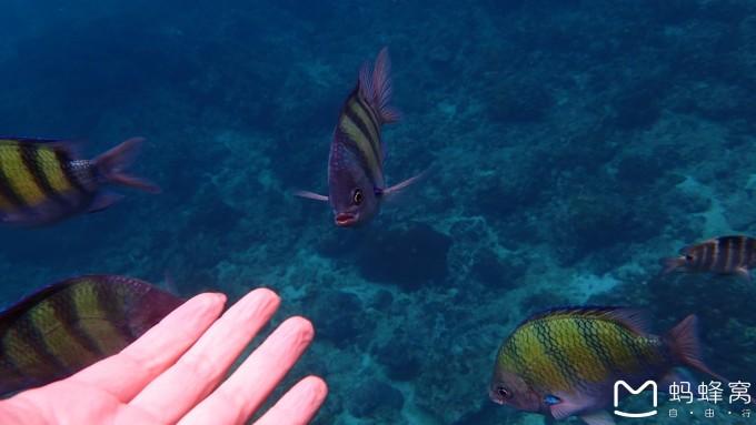 壁纸 动物 海底 海底世界 海洋馆 水族馆 鱼 鱼类 桌面 680_383